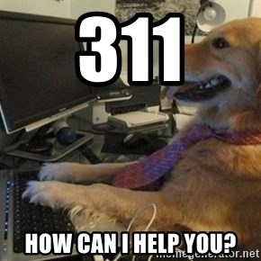 I have no idea what I'm doing - Dog with Tie - 311 How can I help you?
