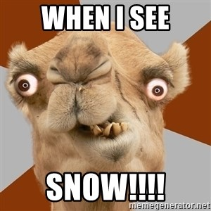 Crazy Camel lol - when I see snow!!!!