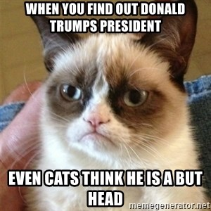 Grumpy Cat  - when you find out donald trumps president even cats think he is a but head