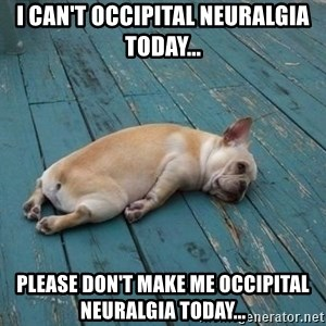 Lazy French Bulldog - I can't occipital neuralgia today... Please don't make me occipital neuralgia today...