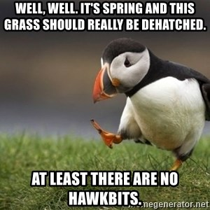 Unpopular Opinion Puffin - well, well. it's spring and this grass should really be dehatched. at least there are no hawkbits.