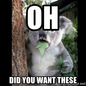 Koala can't believe it - Oh Did you want these