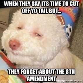 Troll dog - When they say its time to cut off yo tail but... they forget about the 8th amendment