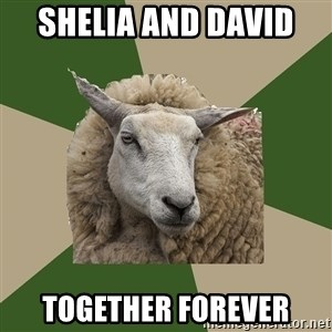 Sociology Student Sheep - Shelia and David  Together forever