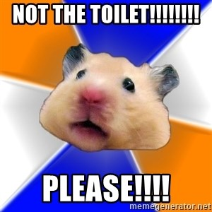 Hamster - NOT THE TOILET!!!!!!!! PLEASE!!!!