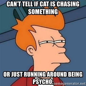 Not sure if troll - Can't tell if cat is chasing something or just running around being psycho.