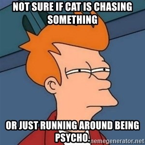 Not sure if troll - Not sure if cat is chasing something or just running around being psycho.