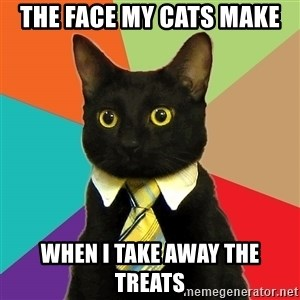 Business Cat - the face my cats make when i take away the treats
