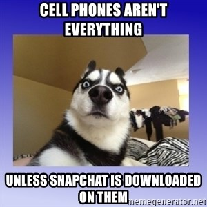 Dog Surprise - Cell Phones aren't everything Unless snapchat is downloaded on them