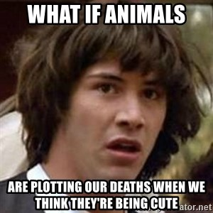 Conspiracy Keanu - what if animals  are plotting our deaths when we think they're being cute