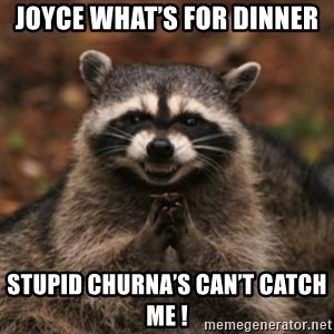 evil raccoon - Joyce what's for dinner Stupid churna's can't catch me !