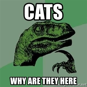 Philosoraptor - cats why are they here