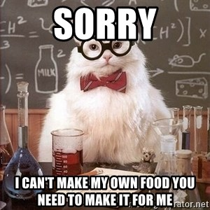 Chemistry Cat - sorry i can't make my own food you need to make it for me