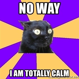 Anxiety Cat - no way  i am totally calm