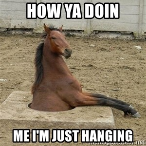 Hole Horse - HOw ya doin Me I'm just hanging