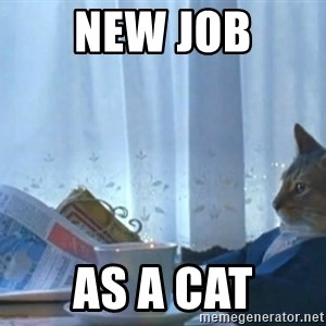 Sophisticated Cat - new job as a cat
