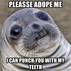 Awkward Seal - pleasse adope me i can punch you with my teeth