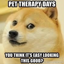 dogeee - pet therapy days You think it's easy looking this good?