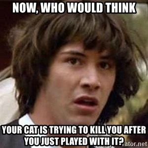 Conspiracy Keanu - Now, who would think your cat is trying to kill you after you just played with it?