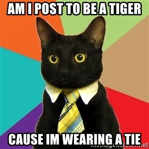 Business Cat - am i post to be a tiger cause im wearing a tie