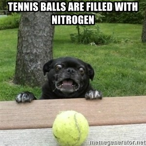 Ermahgerd Pug - Tennis balls are filled with nitrogen