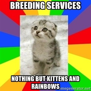 Cute Kitten - Breeding Services Nothing but kittens and rainbows