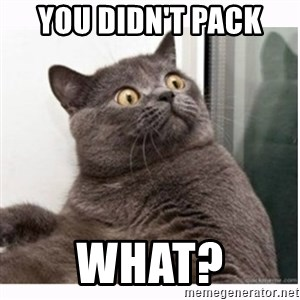 Conspiracy cat - You didn't pack  WHAT?