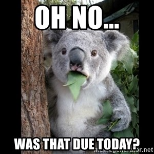 Koala can't believe it - OH NO... WAS THAT DUE TODAY?