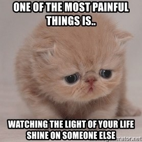 Super Sad Cat - One of the most painful things is.. Watching the light of your life shine on someone else