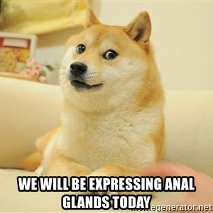 so doge - We will be expressing anal glands today