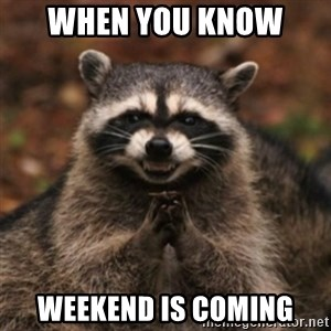 evil raccoon - When you know  weekend is coming