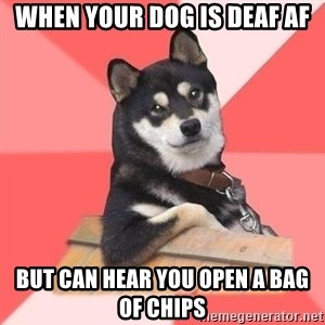 Cool Dog - When your dog is deaf af but can hear you open a bag of chips