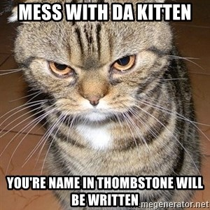 angry cat 2 - mess with da kitten you're name in thombstone will be written