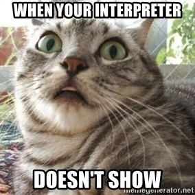 scared cat - When your interpreter  doesn't show