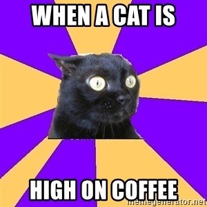 Anxiety Cat - When a cat is  High on coffee