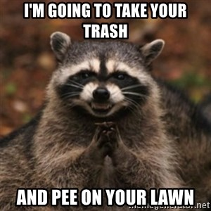 evil raccoon - i'm going to take your trash and pee on your lawn