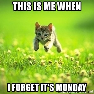 God Kills A Kitten - this is me when i forget it's monday