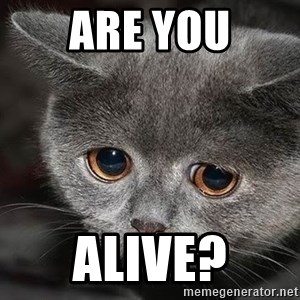 sad cat - Are you Alive?