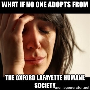 crying girl sad - What if no one adopts from the oxford lafayette humane society