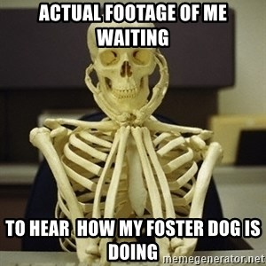 Skeleton waiting - Actual footage of me waiting to hear  how my foster dog is doing