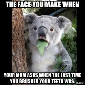 Koala can't believe it - The face you make when your mom asks when the last time you brushed your teeth was.