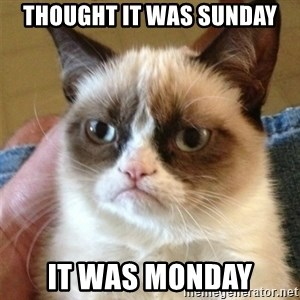 Grumpy Cat  - thought it was sunday it was monday