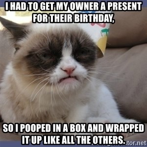 Birthday Grumpy Cat - I had to get my owner a present for their birthday, so I pooped in a box and wrapped it up like all the others.