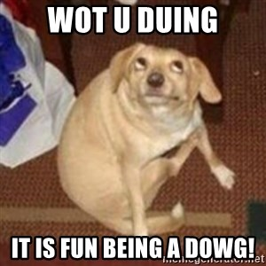 Oh You Dog - WOT U DUING IT IS FUN BEING A DOWG!