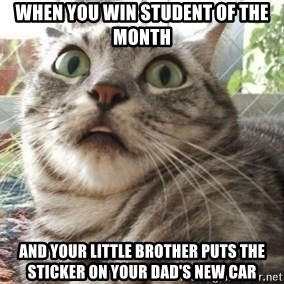 scared cat - When you win student of the month and your little brother puts the sticker on your dad's new car