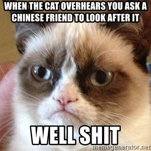 Angry Cat Meme - When the cat overhears you ask a chinese friend to look after it Well shit