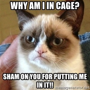 Grumpy Cat  - Why am I in cage? Sham on you for putting me in it!!