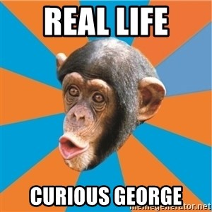 Stupid Monkey - Real life Curious George