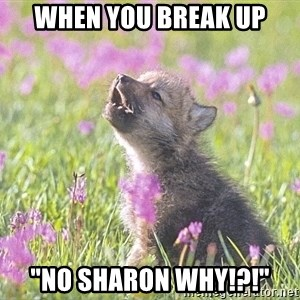 """Baby Insanity Wolf - When you break up """"No sharon Why!?!"""""""