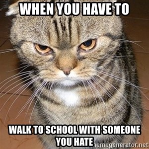 angry cat 2 - When you have to walk to school with someone you hate